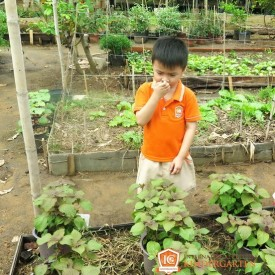ICK Be di family garden  6 resize